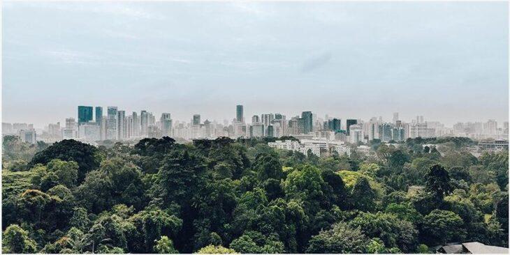 City in the garden