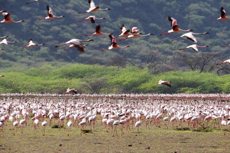 Kenya 2