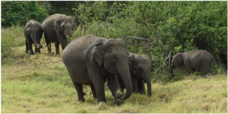 Minneriya National Park - The Elephant Gathering