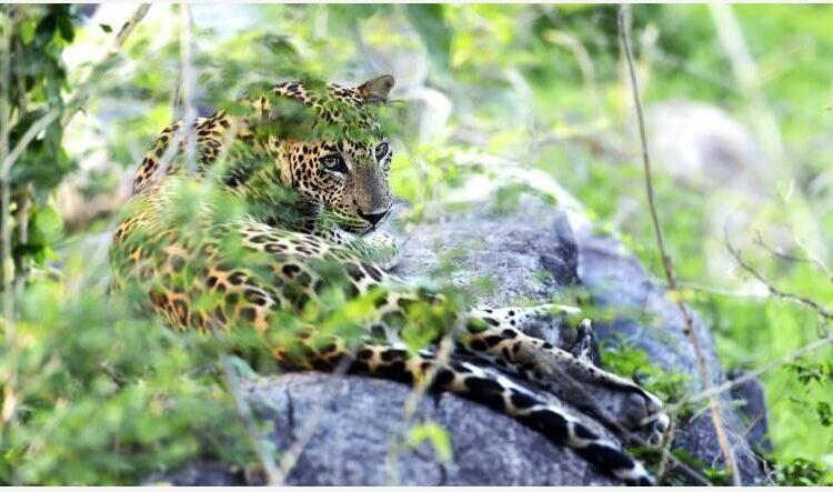 National parks of Sri Lanka