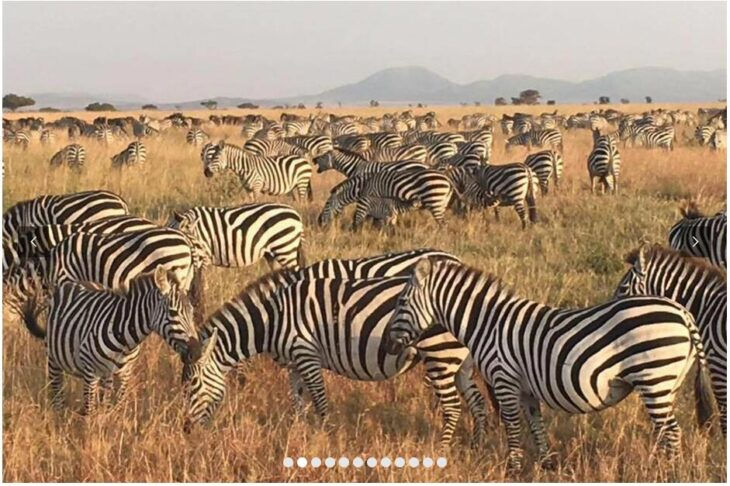 TANZANIA - FEEL THE PULSE OF THE AFRICAN WILDERNESS 2