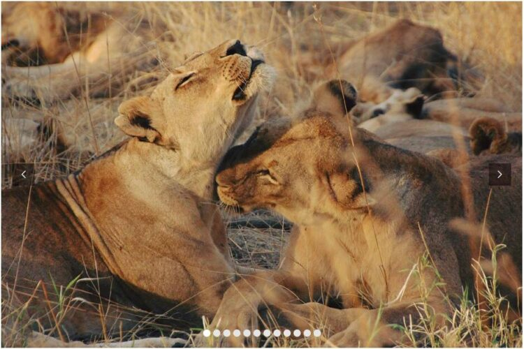 TANZANIA - FEEL THE PULSE OF THE AFRICAN WILDERNESS